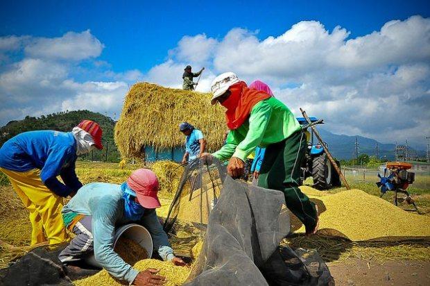 postharvest-harvesting-farmers